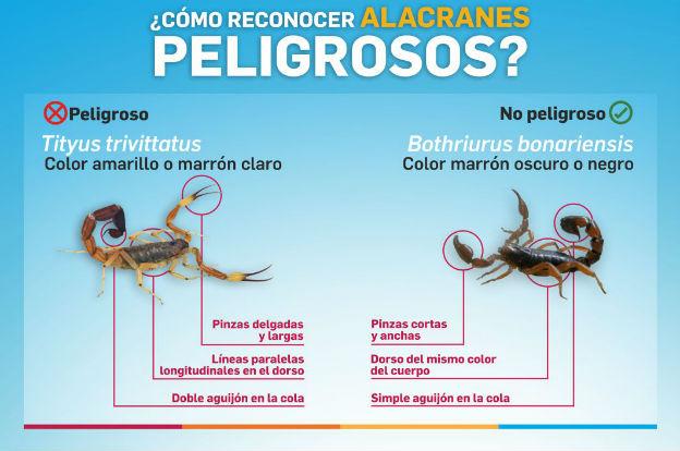 En la provincia de Córdoba, las especies de alacranes que se encuentran más frecuentemente son el Bothriurusbonariensis y el Tityustrivittatus.