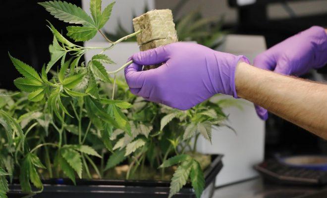 Jujuy tendrá el primer centro de cannabis medicinal del país