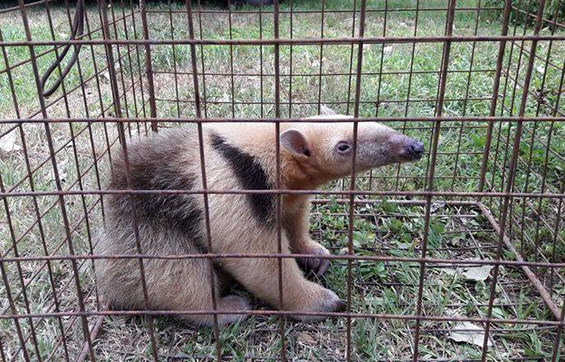 En enero, se recuperaron cerca de 150 animales silvestres