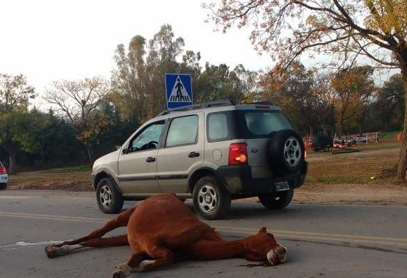 Otra vez un caballo suelto provocó un accidente en la ruta
