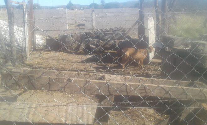 ADMA y la policía rescataron tres perros en estado de abandono