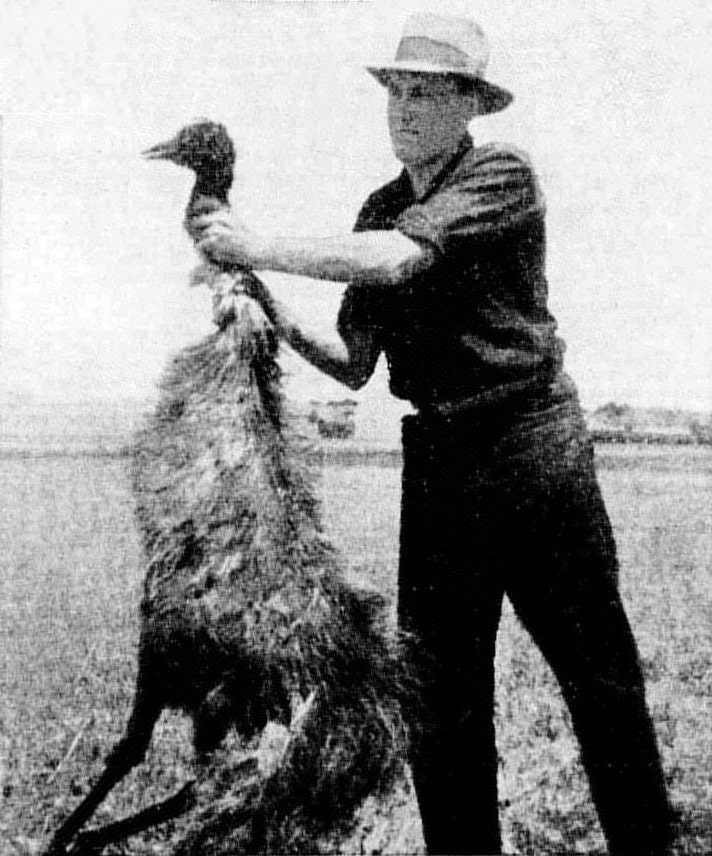 La Guerra del Emú