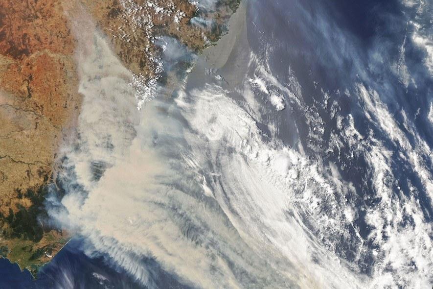 Australia: La vida silvestre sufre los enormes incendios forestales